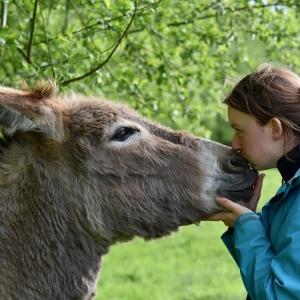 Symbolfoto Eselwandern in der Uckermark