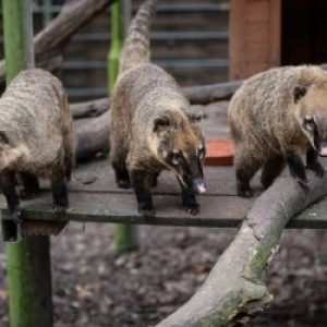 Kobelt-Zoo Frankfurt