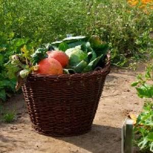 Gemüsegärten zum Mieten (c) meine ernte