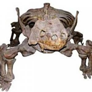 Palaeontologisches Museum