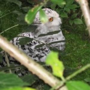 NABU Vogelschutzzentrum Mössingen (c) alex grom