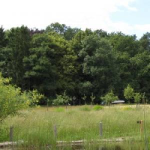 Blick über die Wiesen zum Wald