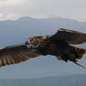 Wilpark Poing Greifvogel Flugschau