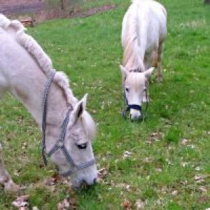 Ponyhof in Meyerspark Hamburg
