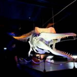 Skelett eines Pottwals im Waloseum