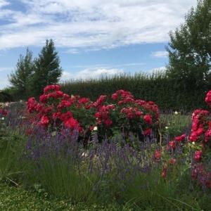 Usedoms Botanischer Garten in Mellenthin