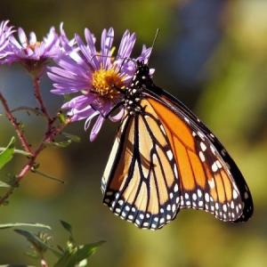 Symbolfoto Garten der Schmetterlinge