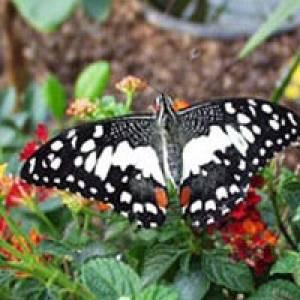 (c) Schmetterlingsfarm Steinhude