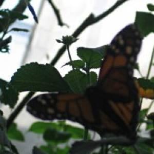 Schmetterlings-Erlebnispfad in Bad Sobernheim