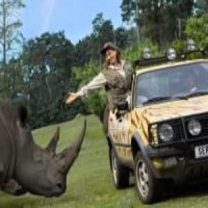 Nashorn am Jeep
