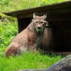 (c) Steinwasen Park - Wildpark