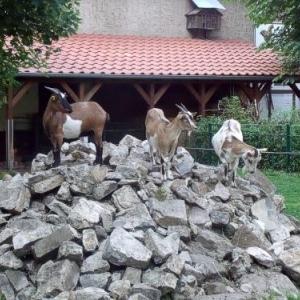 Tiergarten Staßfurt