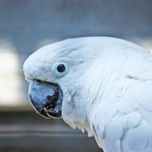 Solinger Vogel- und Tierpark