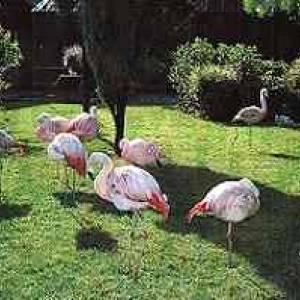 (c) Vogelpark Biebesheim
