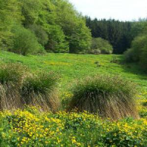 Waldsaumpfad in Losheim am See