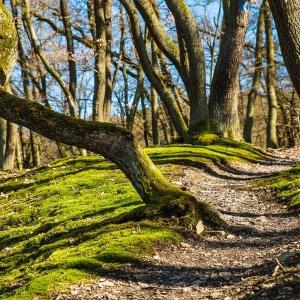 Symbolfoto Waldwunderweg in Licherode /Gemeinde Alheim