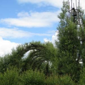 Weidenkathedrale