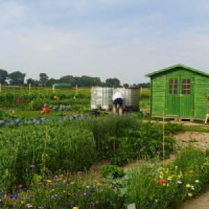 Ein eigener Gemüsegarten für Familien in Werder