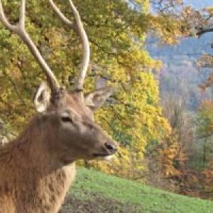 """Wildfreigehege """"Nöttler Berg"""" in Saerbeck"""