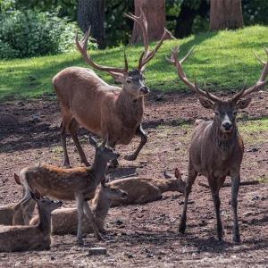 Wild und Wanderpark Silz