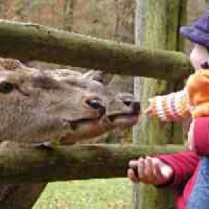 (c) Wildpark Büdingen