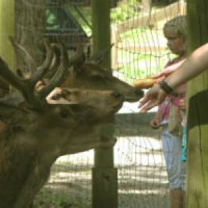 Wildpark Donsbach