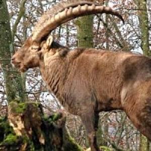 Wildpark Eichert Heidenheim