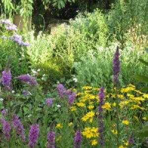 Pflanzen mit lila und gelben Blüten