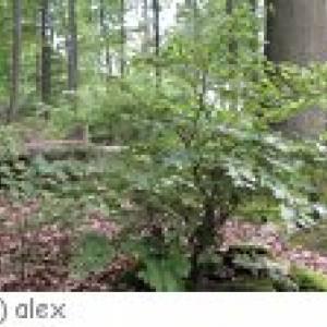 Merchweiler Walderlebnispfad Illgrund