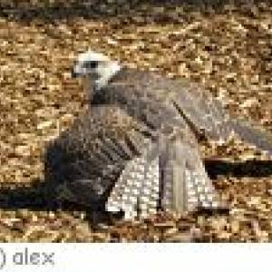 Heidenheim Greifvogelpark