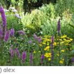 Oberelsbach - Schmetterlingslehrpfad