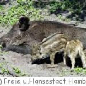 Wildgehege Bergedorfer Gehölz  in Hamburg
