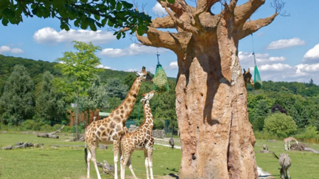 Afrika Savanne im Opel-Zoo