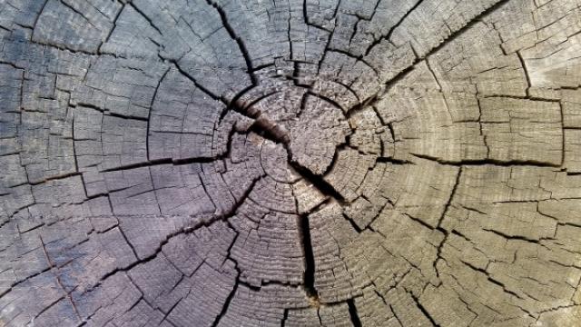 Symbolfoto Erlebniswelt Naturstoff Holz  in Baruth