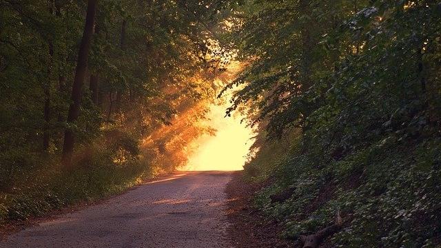 Naturlehr- und Erlebnispfad Wörmlitzer Wald