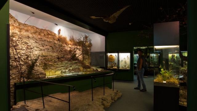 Museum für Naturkunde Gera