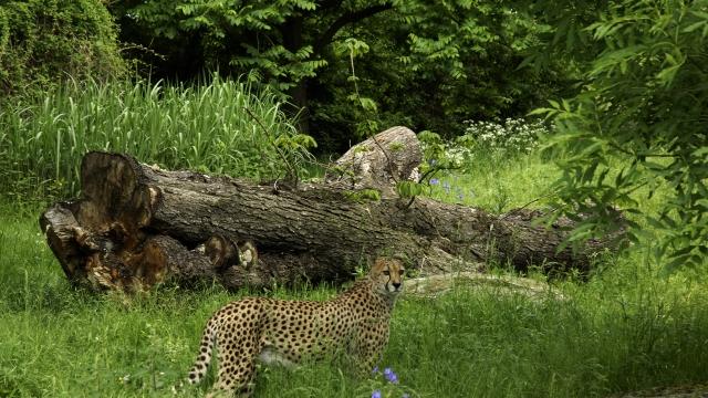 Faszinierende Tierwelten im Zoo Köln