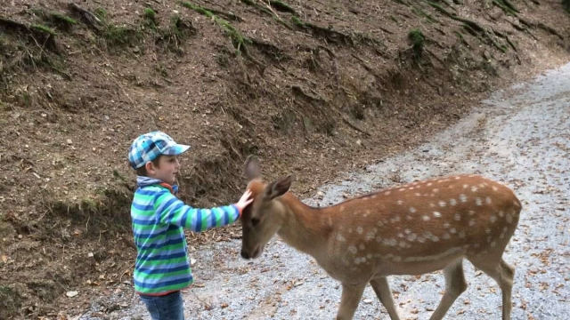 Wild- und Freizeitpark Westerwald