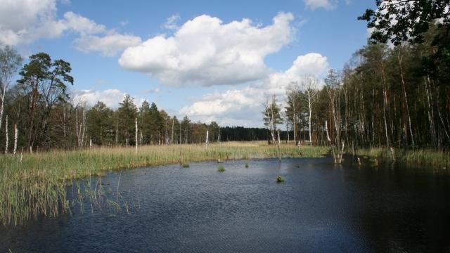 Naturpark Dübener Heide