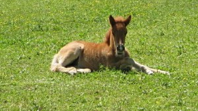 Ponyclub Ohlendorf in Seevetal