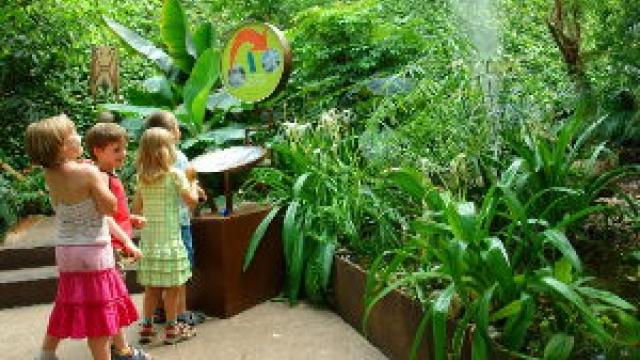 Ausflug in den Regenwald in der Biosphäre Potsdam