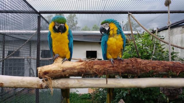 Vogelpark mit Streichelzoo Teltow
