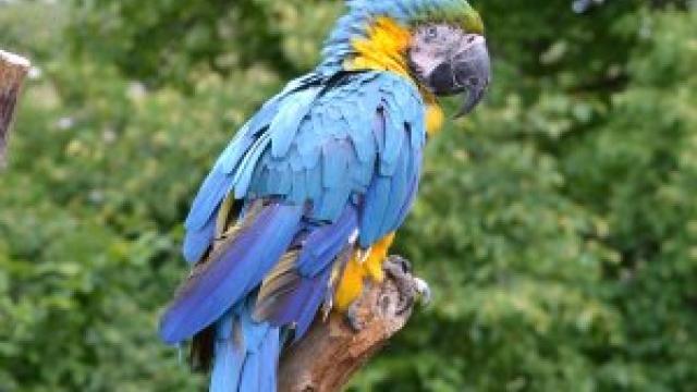 Vogel- und Tierpark Crailsheim (c) alex grom