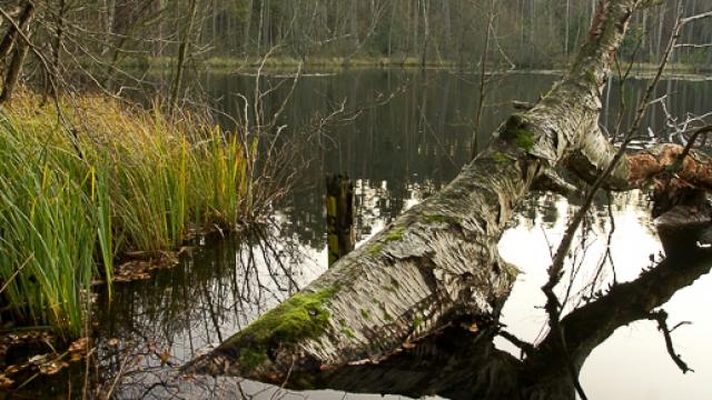 Wald- und Wassererlebnispfad Menz