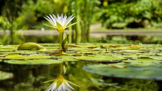 Symbolfoto: Der Alte Botanische Garten in Göttingen