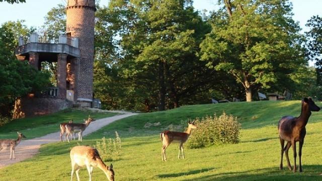 Wildpark Rolandseck in Remagen
